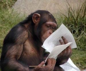 monkey_studying_001